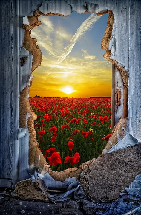 door-breakthrough-poppies